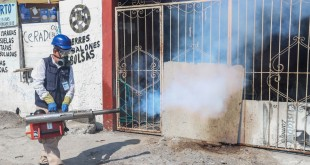 NLD CERO CASOS DE DENGUE (2)